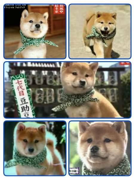 山中司の現在の犬