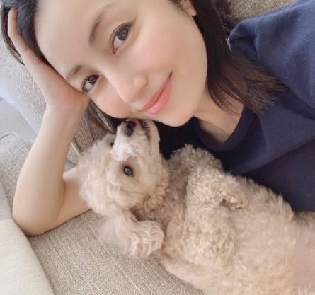 矢田亜希子と犬トイプードル